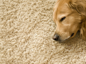 Justin, TX Pet Stain and Odor Removal